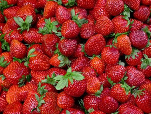 Photo of Strawberry fields forever?