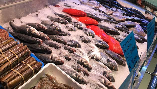 SeeWoo-Fish-Display